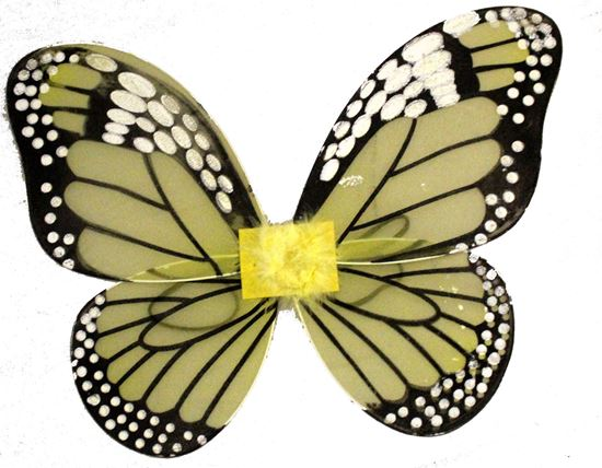 Picture of GREEN & BLACK BUTTERFLY WING